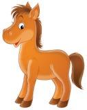 棕色驹 库存图片