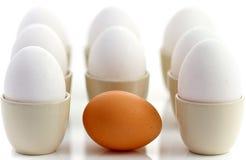 棕色鸡鸡蛋怂恿一包围的白色 库存图片