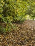 棕色绿色叶子 免版税库存照片