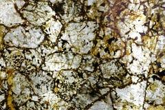 棕黄色优越自然石材料 库存照片