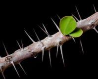 棘手大树枝停止的水多的叶子的有生命的植物 免版税库存图片