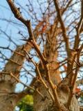 棘手的树和明亮的天空 免版税库存照片