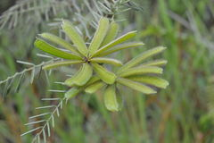 棘手的植物花  库存图片