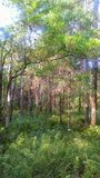 森密诺尔人佛罗里达森林射击 免版税库存图片