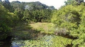 森密诺尔人佛罗里达被修建的沼泽地 库存图片