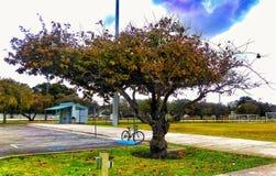 森密诺尔人,风景的佛罗里达 免版税库存图片