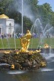 森山,撕毁狮子的嘴-大小瀑布喷泉的雕塑 peterhof俄国 免版税图库摄影