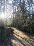 森林🌠³ 免版税库存照片