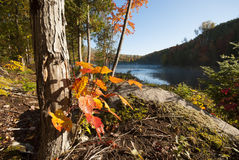 森林、湖和自然在秋天 免版税图库摄影