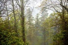 森林、薄雾和青苔在石头举起了看法 图库摄影