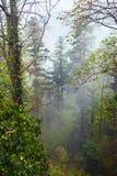森林、薄雾和青苔在石头举起了看法 免版税库存图片