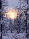 森林。 库存图片