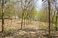 森林七 库存照片