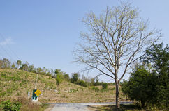 森林三 库存照片