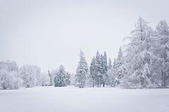 森林下了雪 库存照片