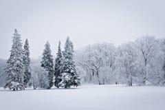 森林下了雪 免版税图库摄影