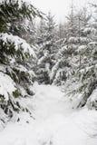 森林下了雪 库存图片