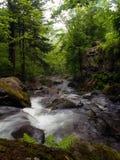 森林下岩石流 免版税库存图片