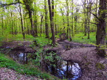 森林下水道草天空森林 免版税图库摄影