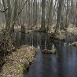 森林丛林 寡妇森林,桤木红色 库存照片