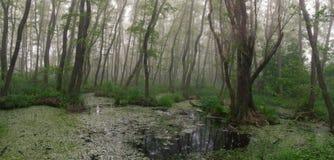 森林丛林 恶鬼参观 寡妇森林,桤木红色 免版税图库摄影