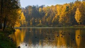 森林丢失它的绿色,改变它染黄,红色和橙色 免版税库存照片