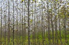 森林五 库存照片