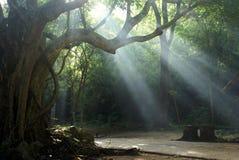 森林亮光 库存照片