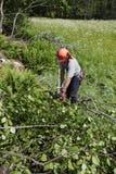 森林伐木工人工作 库存图片