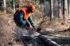 森林伐木工人工作 库存照片