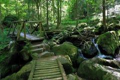 黑森林供徒步旅行的小道通过Gertelbach在Buehlertal,德国森林  免版税图库摄影