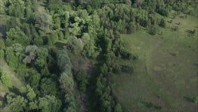 森林俄罗斯的干草原传送带,去除从寄生虫 E ?? 森林和领域在的俄罗斯 股票录像