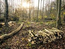 森林修剪与加热的新近地被切开的木头 免版税图库摄影