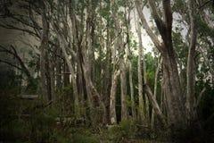 森林储蓄图象 图库摄影