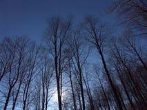 森林光亮的星期日 免版税库存照片