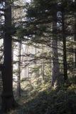 森林光在Ecola国家公园 免版税库存图片