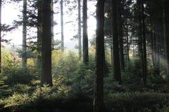 森林光 免版税库存图片