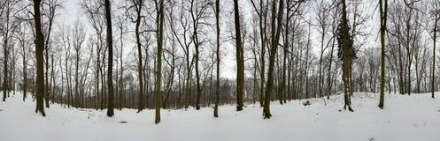 森林全景在冬天- 360度 图库摄影