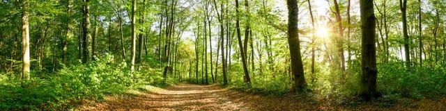 森林全景在明媚的阳光下 图库摄影