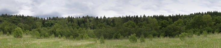 森林全景夏天 免版税库存照片