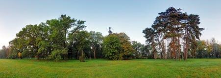 森林全景 库存图片