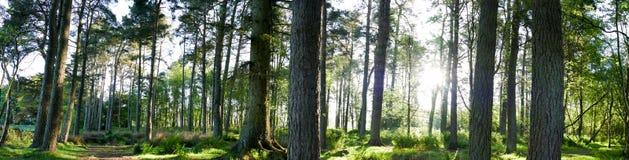 森林全景 库存照片
