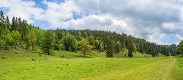 森林全景- Wental谷,德国 免版税库存照片
