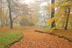 森林公园和干燥小河床与下落的叶子在有薄雾的autu 库存图片