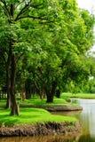 森林公园视图 库存照片