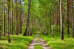 森林公路。美丽的墙纸。 免版税库存图片