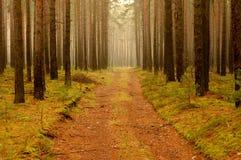森林公路。 库存照片