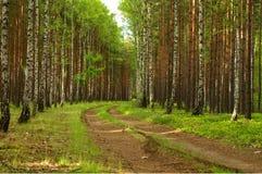 森林公路。 免版税库存照片