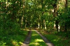 森林公路。 免版税库存图片