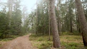 森林公路与雾的早晨 影视素材